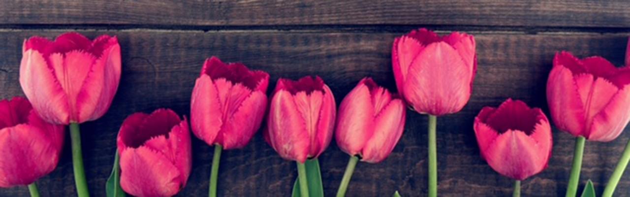 Un tappeto di tulipani in fiore